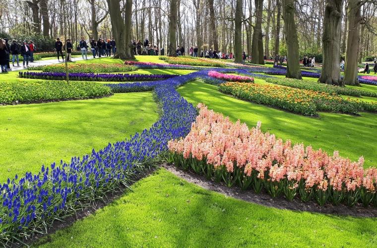 Holland-tulbid, tuuleveskid ja lilleparaad. 04/19 foto: Ane Tobro
