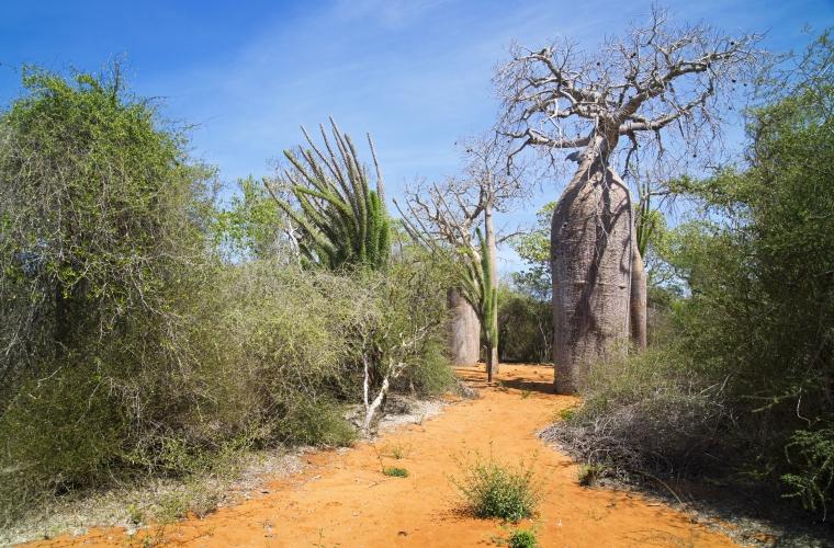 Madagaskar ja Mauritius - ainulaadne loodusreis ja puhkus ookeanirannal