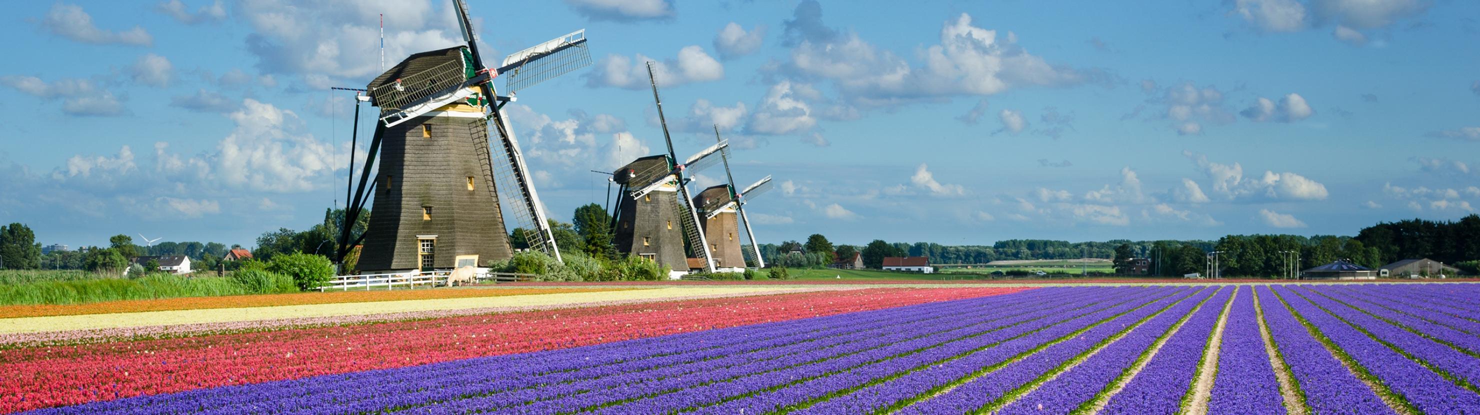 Holland - tulbid,  tuuleveskid ja lilleparaad