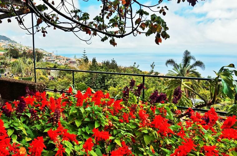 Madeira - kevadine lillefestival, grupp 2