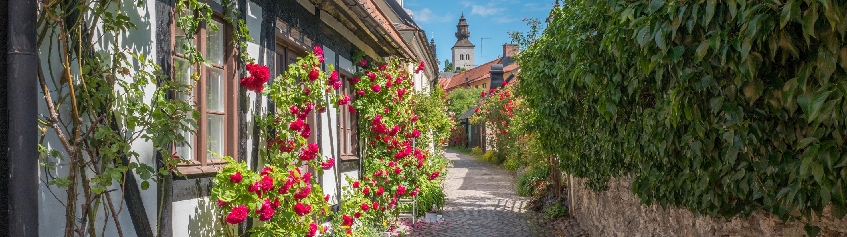 Gotlandi saar