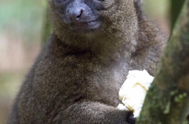 Madagaskar - ainulaadne loodusreis