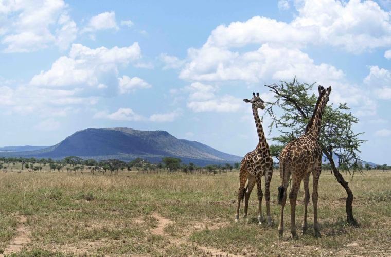 Tansaania safarid ja Sansibari rannapuhkus