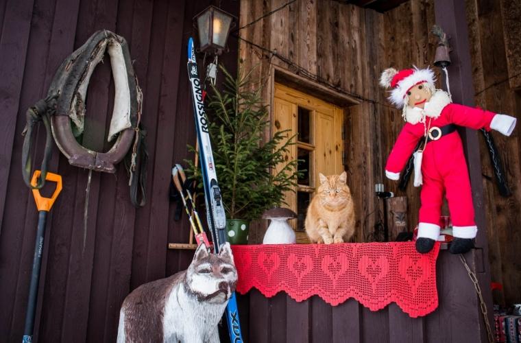 Eesti - Jõulureis - Hyskipargi kelgukoerte jõulumaa Raplamaal